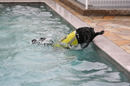 Img_20110612swim