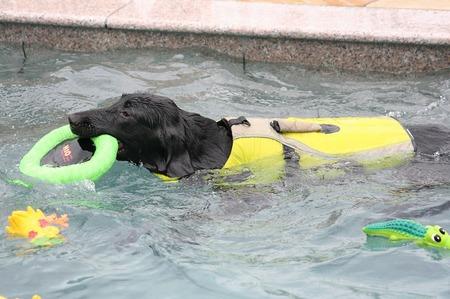 Img_20110612swim_15