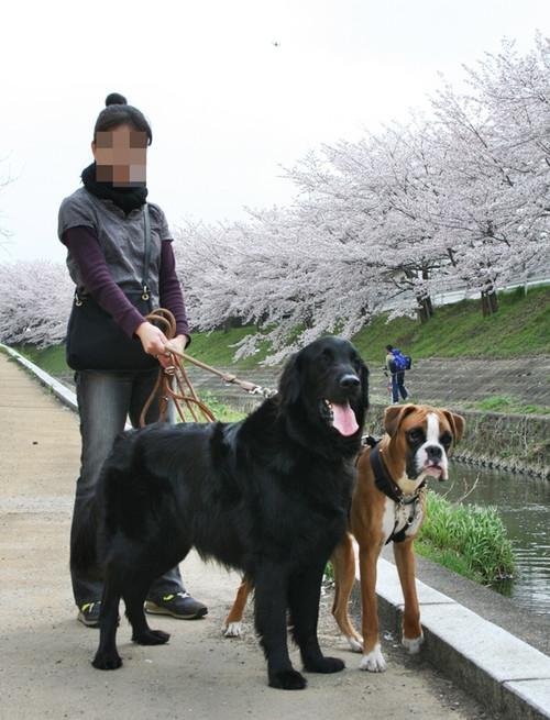 Sahogawa040806